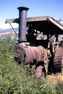 Rusting Burrell steam engine overgrown by hawthorn at Bridgewater 1970