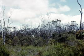 Coastal scrub at Brickmakers Bay 1965