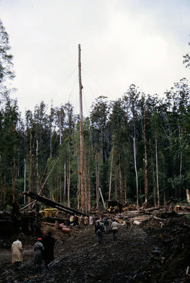 People gather in timber work site