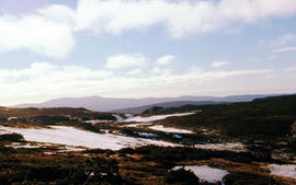 Plateau above Cradle Mountain