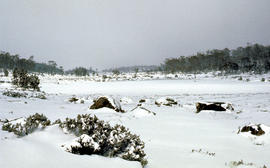 Lake Loane under snow cover 1978