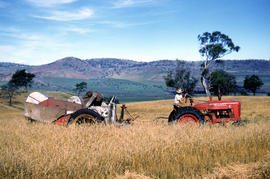 Farmer harvests grain at Glen Dhu