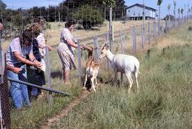 Visitors feeding fallow deer at Thorpe Farm, Bothwell
