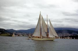 Astor in Derwent River