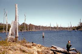 Man fishing near Waratah 1960