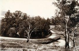 Lower Domain Road at back of Royal Botanical Gardens