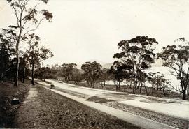 Road to Government House, on Gun Carriage Drive