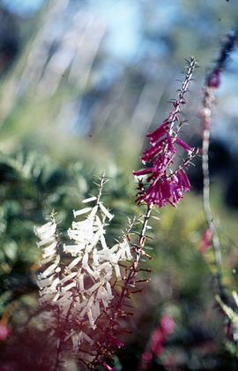 Flowers in bushland