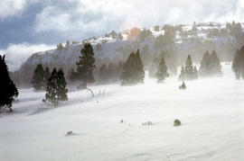 Snow near Mount Ophel