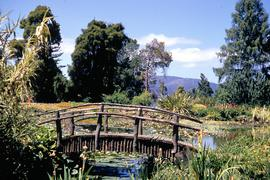 Timber bridge over pond at botanical gardens