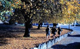 Schoolgirls walking in autumn leaves