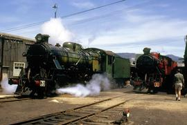 C Class steam locomotives at Hobart roundhouse