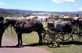 Horse and carriage at Launceston Show 1972