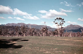 Open paddocks near Ben Lomond