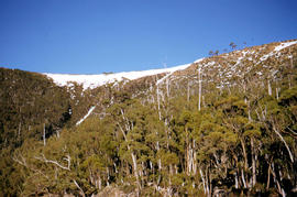 Ice-covered shrubs on Mount Mawson