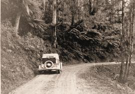 Car on winding bush road