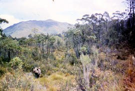 Bushwalking near Sandfly Creek