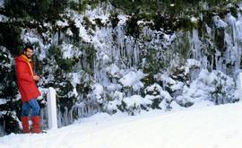 Icicles near the Springs 1986