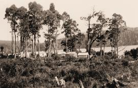 Bush camp beside lake