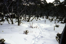 Track to Lakes Belton and Bercher under snow