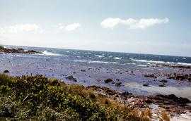 Rocky shore to west of Boat Harbour