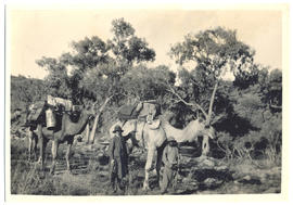 Photograph of Quart-Pot  and Mangy, and aboriginal guide Jim