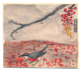 Sturt Bean Tree blossoms and Crimson chat