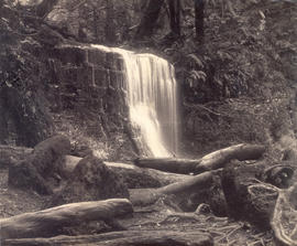 Fern Tree Bower and Silver Falls,