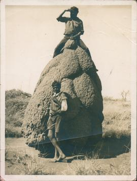 Photograph  of  Wallaby and Des