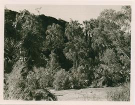 View of valley with palms