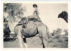 Photograph of Olive Muriel Pink sitting on a camel, Larry